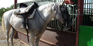 Paardrijden Hidalgo