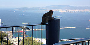 Gibraltar aapje