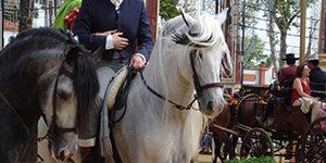 Spaanse Lipizaner raspaarden
