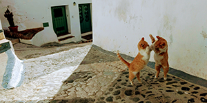 Spelende katten in historisch centrum